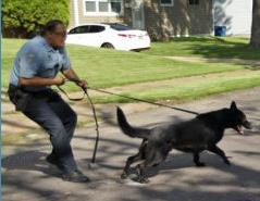 dog pulling cop